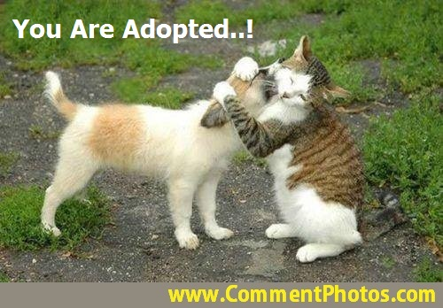 You Are Adopted - Cat Hugs Dog - Kitty Hugging Puppy