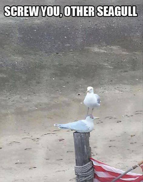 Screw You Other Seagull