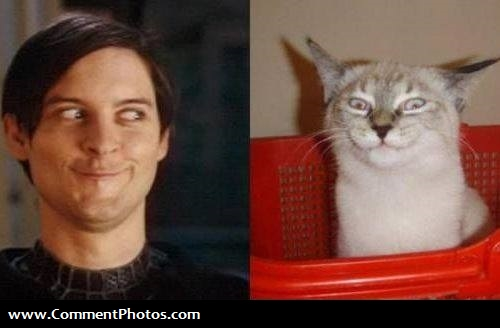 Close Enough - Tobey Maguire and Cat Expression