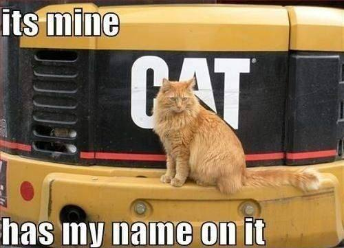 Its mine. It has my name on it - Funny Cat sitting on to of truck