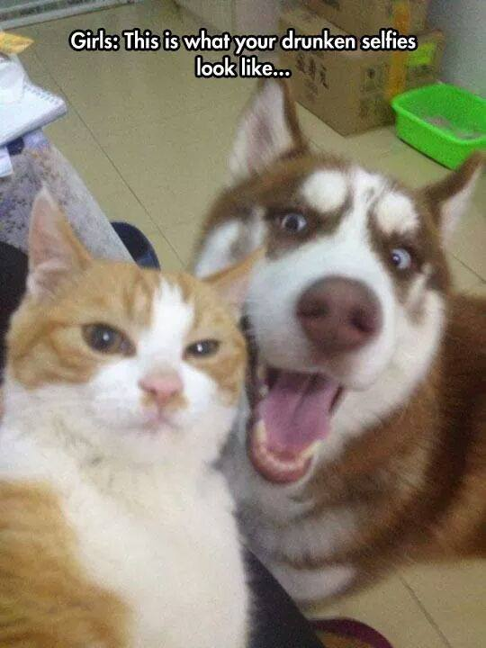 Girls.. This Is What Your Drunken Selfies Look Like - Dog and Cat
