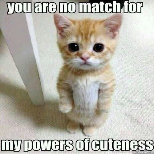 You are no match for my powers of cuteness - Cute Standing Kitty Cat