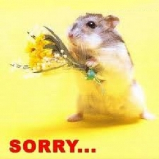 sorry   rat with flower   commentphotos     english photo comments