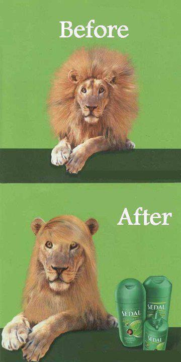 Before and after shampoo - Girls beauty