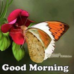 title good morning butterfly in flower tags good morning butterfly in