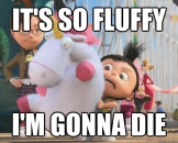 Its So Fluffy I am Gonna Die