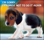 I am Sorry - I Promise Not To Do It Again - Cute Puppy