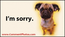 I am Sorry - Pug Dog