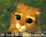 I am Sorry - Will You Forgive Me - Puss In Boots Kitty