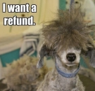 I Want A Refund - Dog with stupid hair