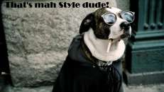 Thats Mah Style Dude - Dog with cooling glasses